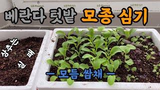 베란다 텃밭 모종 심기 / 상추파종 실패 이유