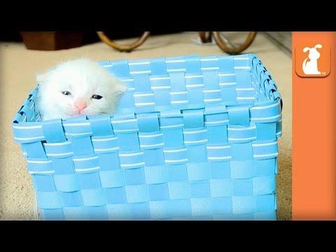 Fluffy Baby Kitten In A Blue Basket - Kitten Love