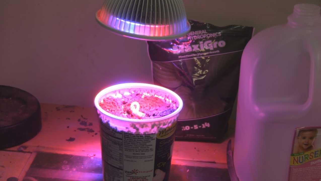 Can This 12watt Led Grow Light Actually Grow A Plant