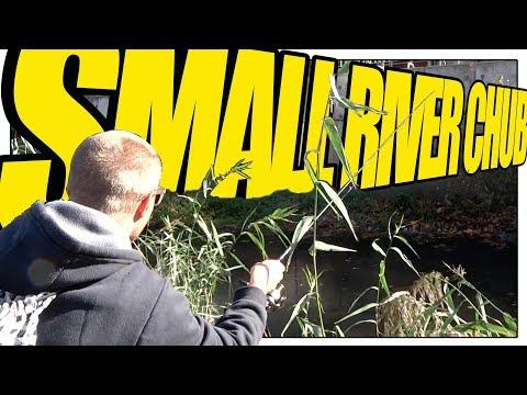 Small River Chub Fishing