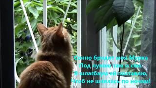 Кошка у окна. Мысли и высказывания. The cat by the window. Thoughts and sayings.