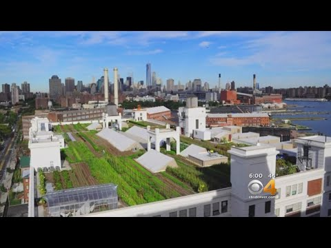 Denver Voters Approve Green Roof Plan