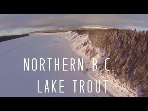 northern-b-c-lake-trout