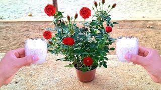 Adubo Natural Para Florescer Qualquer Planta