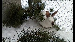 видео Зимние кролики (окрол зимой) | Разведение кроликов и кролиководство для начинающих