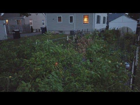 Вопрос: Почему выращивать овощи в своих огородах становится бессмысленным?