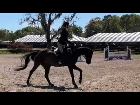 HASTY HILLS FARM, INC - Welcome to one of the finest training and