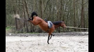 Headshaking fixed by training - horse docu - headshakers are not unrideable!