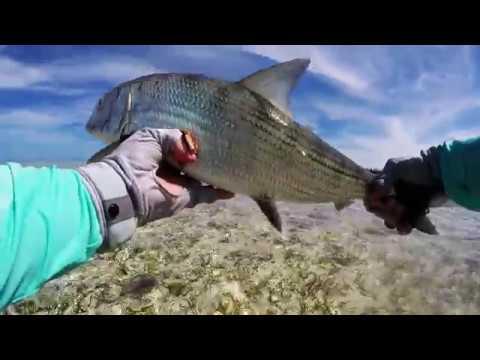 Bonefish On The Fly, Casuarina Point, Central Abaco, Bahamas