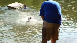 Charleston Weim Club & Weim Rescue Of Sc Swim/dock Diving Picnic