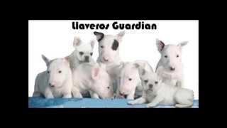 Llaveros De Bulldog Frances Y Bull Terrier