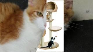 домики для кошек интернет магазин недорого