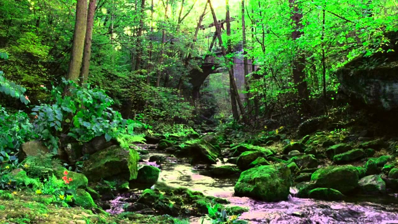 Free Background Footage Forest River Youtube
