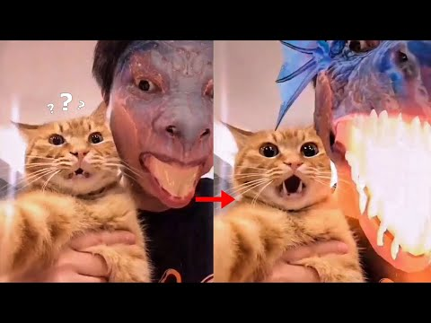 Cat Got Frightened