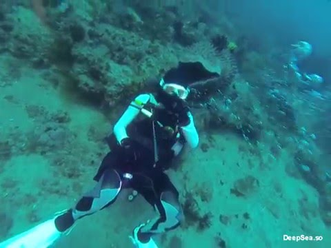 [Diving Club]DeepSea 2015 송년투어 편집영상 #1-ex