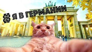 ПОЗДНИЕ ПЕРЕСЕЛЕНЦЫ: Как перевести домашнее животное в другую страну