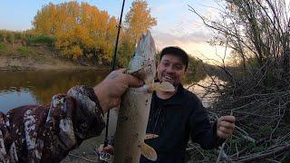 Рыбалка на Реке Каргат Сан Саныч и ЩукарЪ