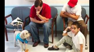 Therapy Dogs-in-training At Jacobi Medical Center