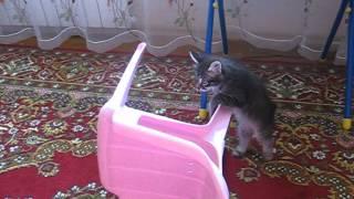 Борьба котенка со стулом, стул победил