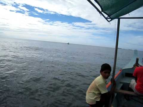 a bunch of dolphins in the sea of tarkarli, malwan....