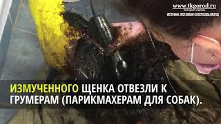 Грумеры спасли собаку которая провела сутки в яме с гудроном  Июнь 2018  Братск