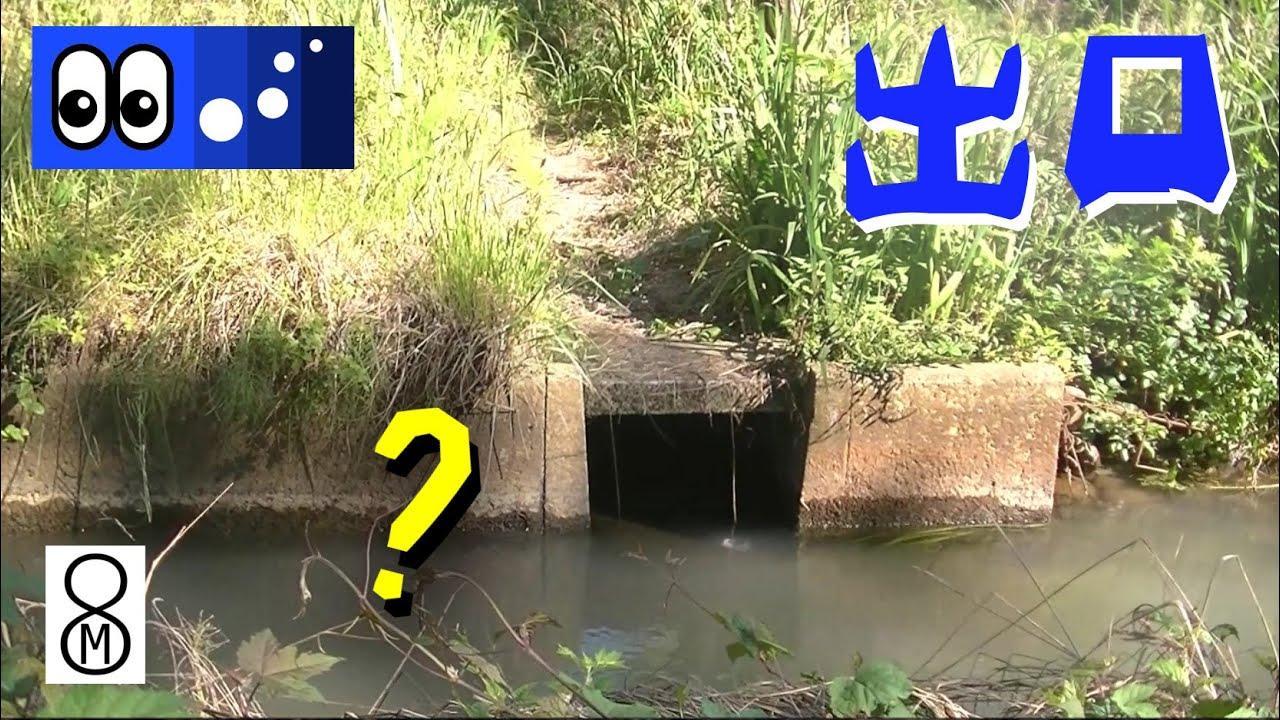 【水辺潜入】雨で濁った用水路、湧き水の出口に集まる魚は?