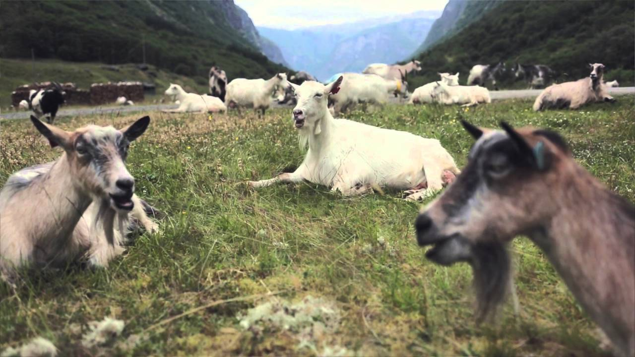 Thumbnail: Folk songs and goat cheese by the Nærøyfjord