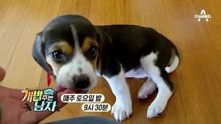 [개밥주는남자 미공개] 개삐친 아기 비글의 칭얼칭얼 사운드!_웹오리지널