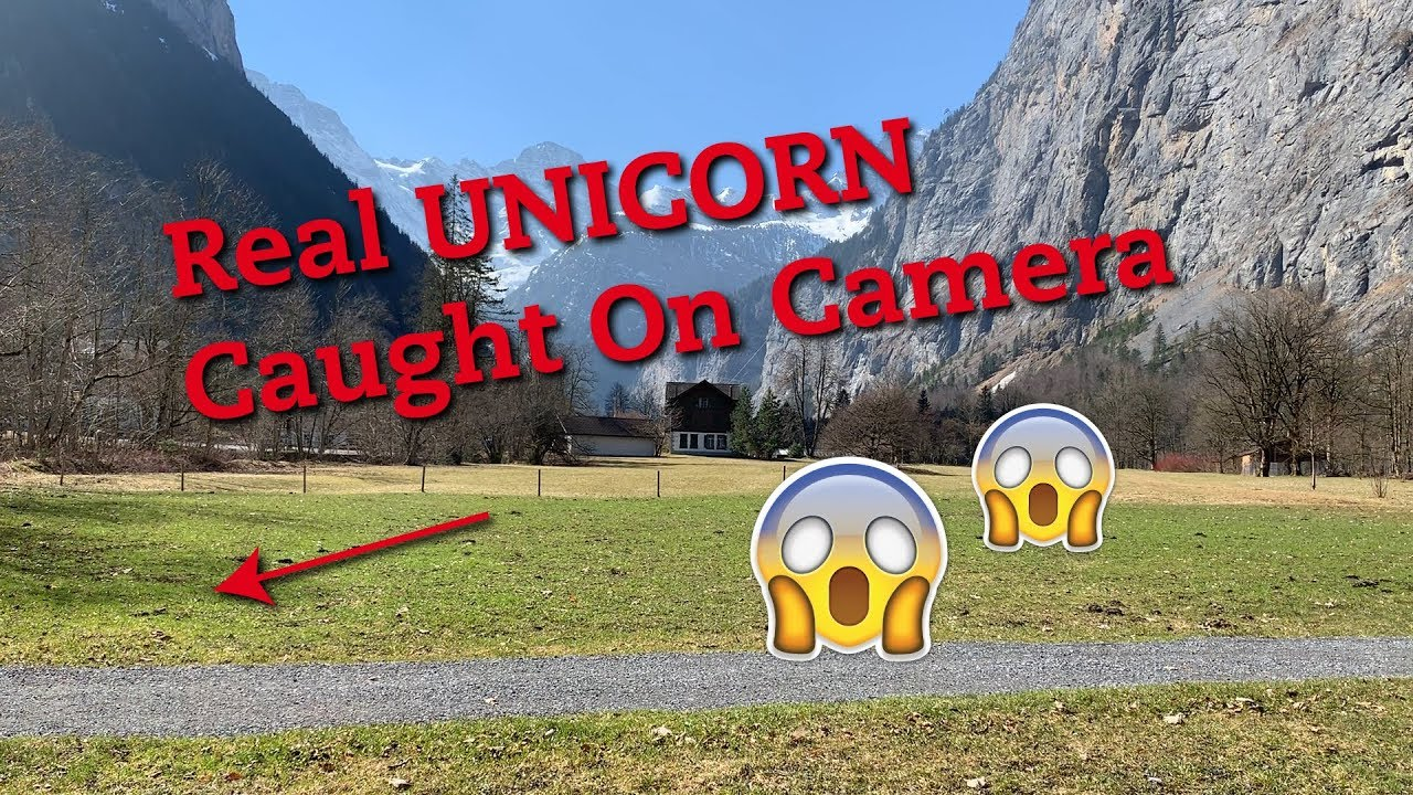 Real Unicorn Caught On Camera Youtube
