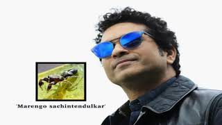 Latest Sports News - Newly discovered spider species named after Sachin Tendulkar