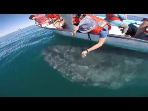 Baja California Whale Watching 2016