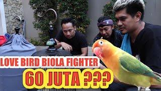 Download lagu 60 JUTA...!! DENNY CAGUR TAKE OVER LOVEBIRD BIOLA FIGHTER  DURASI