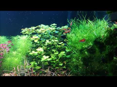 Juwel Rio 350 pearling plant setup