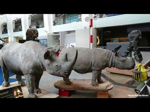Natural History Museum  / London T-Rex / 1080 HD