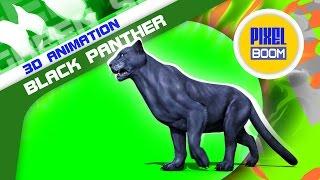 Green Screen Black Panther Feline Animals Runs Walks - Footage PixelBoom