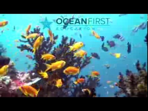 Indo Pacific Fish ID By Ocean First Education