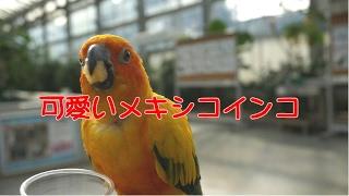 掛川花鳥園のコガネメキシコインコに餌をあげてみました。平日に出かけ...