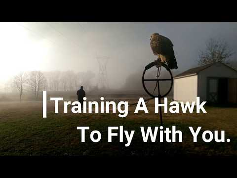 Falconry: How To Train A Hawk To Fly With You