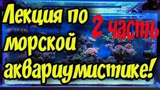 Морской аквариум для начинающих! Теплая дружественная лекция, беседа о морском аквариуме! 2 часть