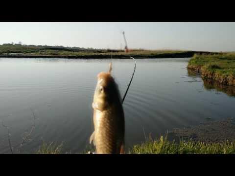 Лучшее время ловли карася на реке