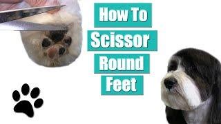 How To Clip & Scissor Round Feet | Havanese