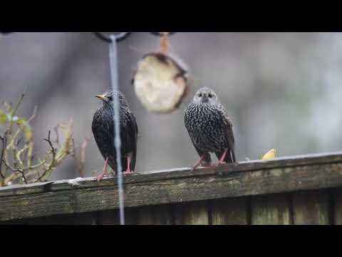 Garden Wildlife, Canon EOS 600d, Tamron 150-600mm