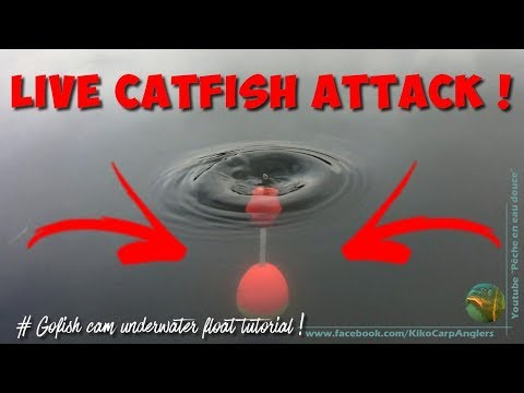 LIVE CATFISH ATTACK DURING GOFISH CAM TUTORIAL !