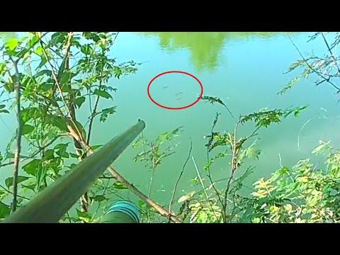 ยิงปลาเช้านี้น้ำไสๆ บนต้นไม้ ปลาลอยเป็นฝูงดีจัง  ปืนลม8มิล Burger King Pie Whalom PVP PCP Langdon So