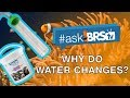 Why should I do water changes? | #AskBRStv