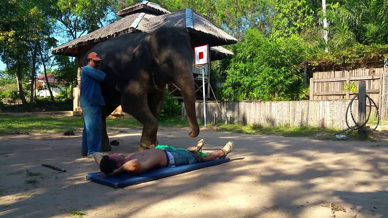 Elephant blowjob! Sexy massage with happy ending ;)