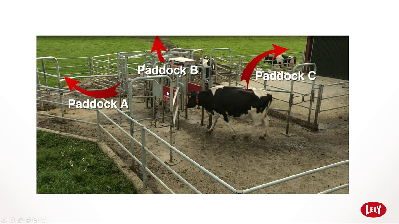 Pasture Management in Automatic Milking Systems (AMS)