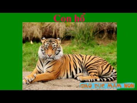 Dạy bé học - các loài vật (hình ảnh và tiếng kêu)  tập 1 kèm video and more 2016