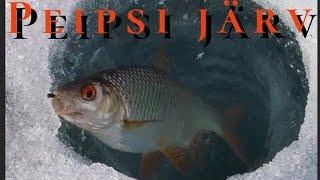Зимняя Рыбалка на Чудском озере 2021 дер Доможирка КРУПНАЯ ПЛОТВА на БУТЕРБРОД ЗДРАСТИ СНАСТИ