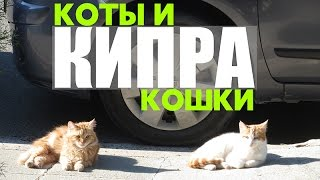 Кошки Кипра. Видео про кошек и котов. Супер кот. Смешные кошки. Кошки на Кипре.